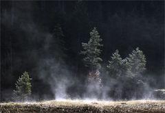 Der etwas andere Waldbrand
