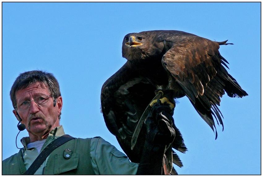 Der Falkner und sein Federvieh
