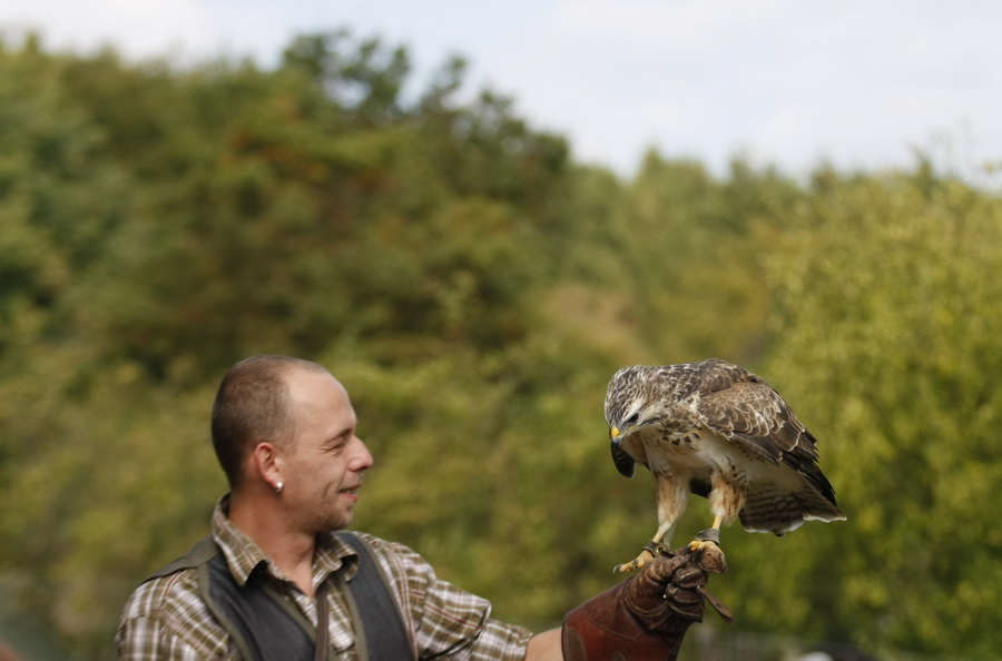 Der Falkner und sein Tier