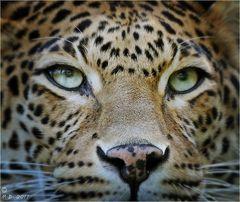 Der faszinierende Blick....
