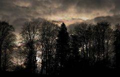 Der Finsterwald
