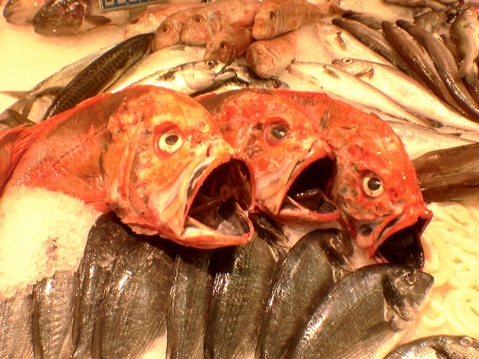 der Fischchor ist auf Eis gelegt