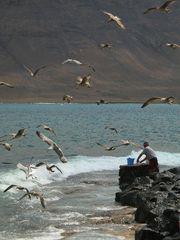 Der Fischer und die Möwen