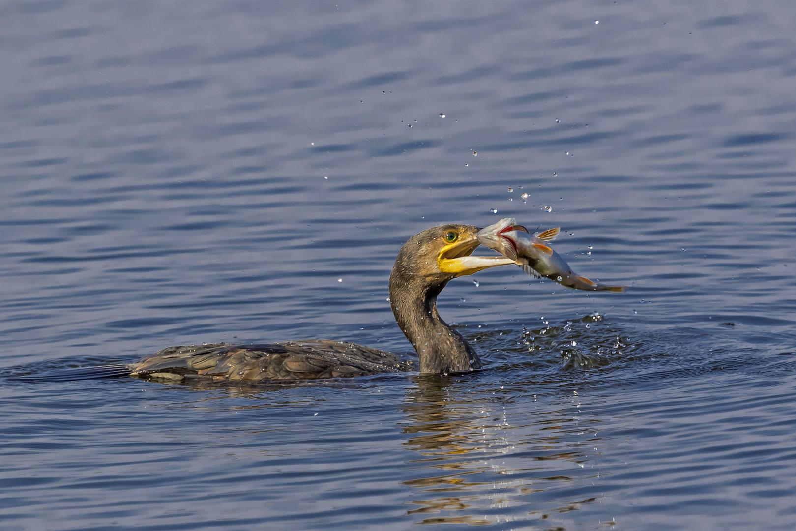 Der Fischfänger