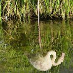 der Flamingo betrachtet sich im Spiegel
