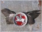 > der fliegende meldorfer <