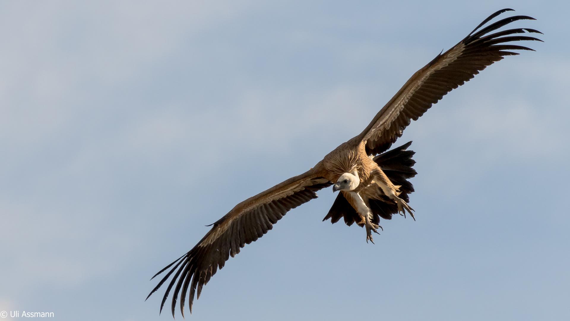 Fliegende Tiere