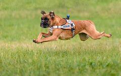 Der fliegende Rettungshund