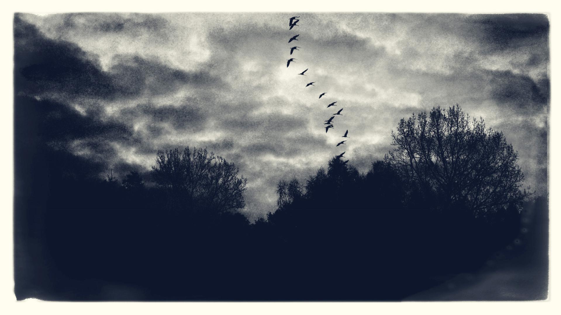 Der Flug der Kraniche