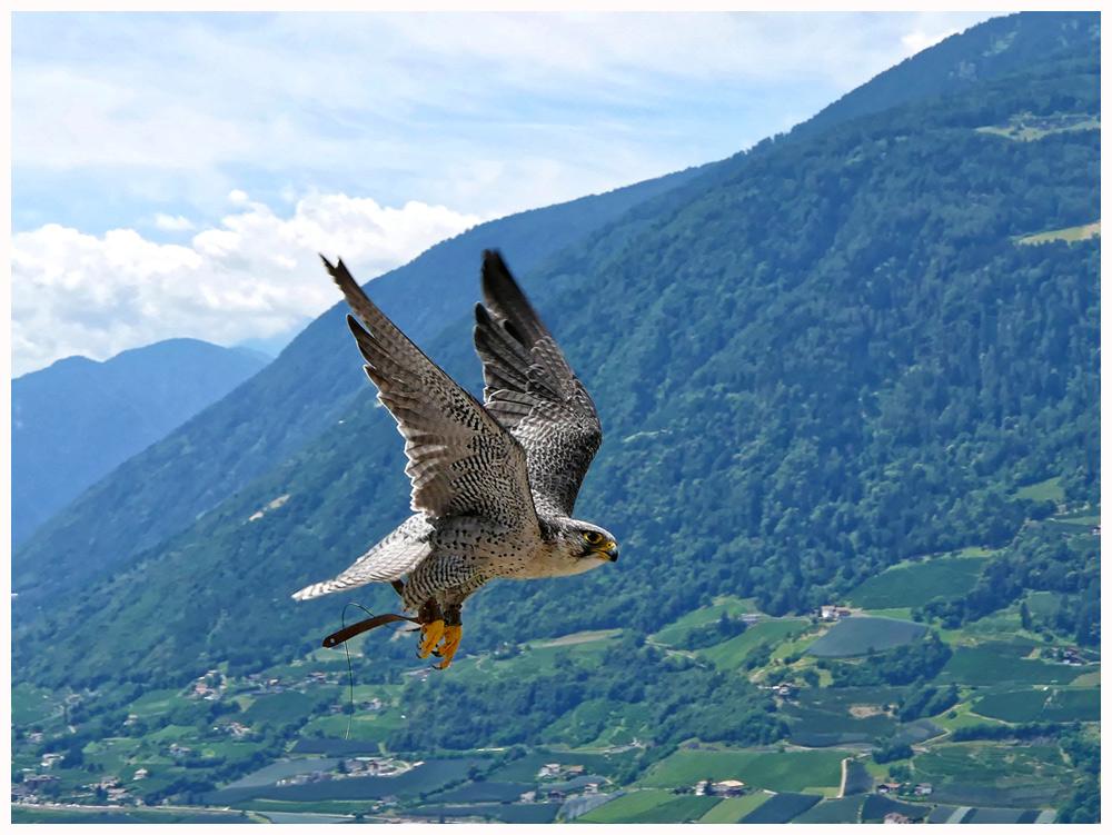 Der Flug des Falken