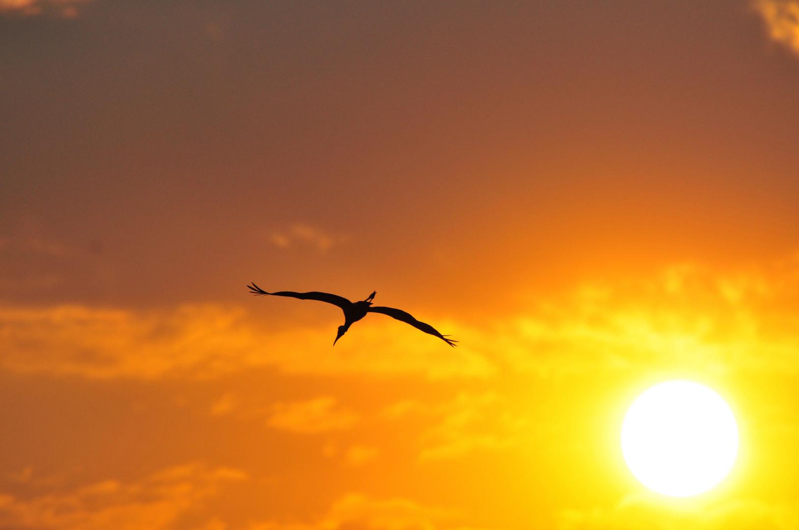 Der Flug des Reihers