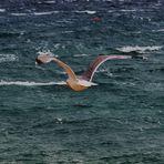 der Flug über s Meer