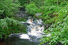 Der Fluss Hoegne im Hohen Venn - 1
