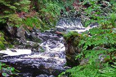 Der Fluss Hoegne im Hohen Venn - 3