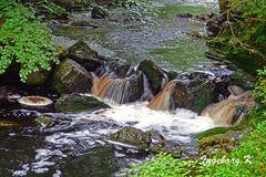Der Fluss Hoegne im Hohen Venn - 4