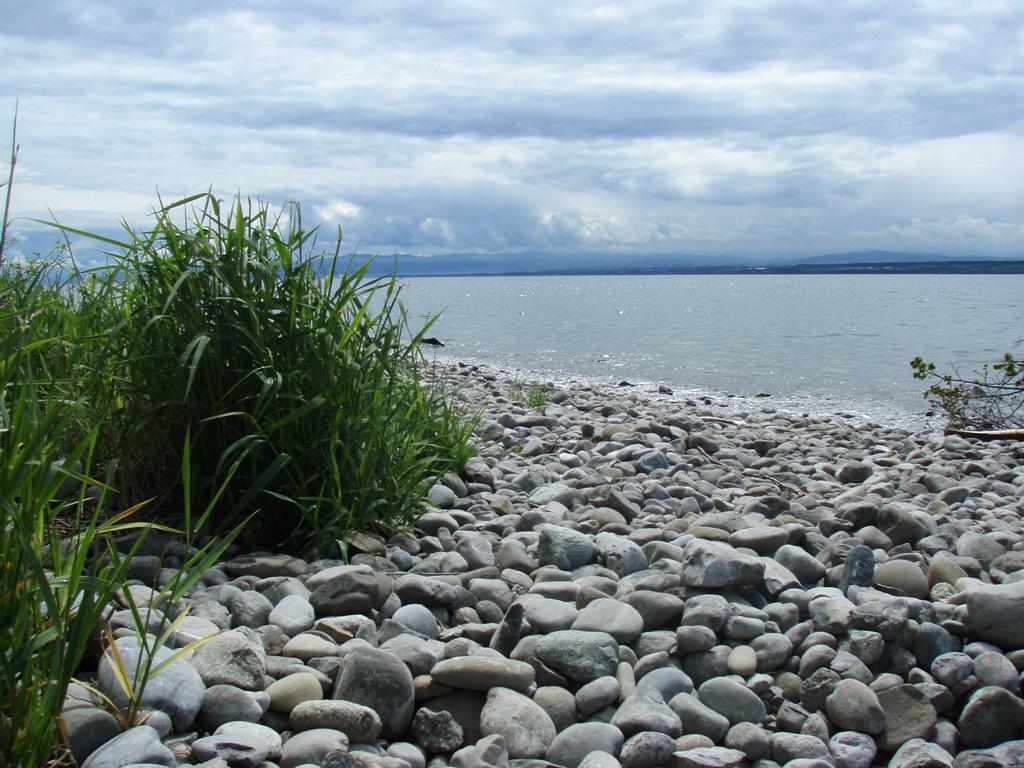 Der Fluss im See