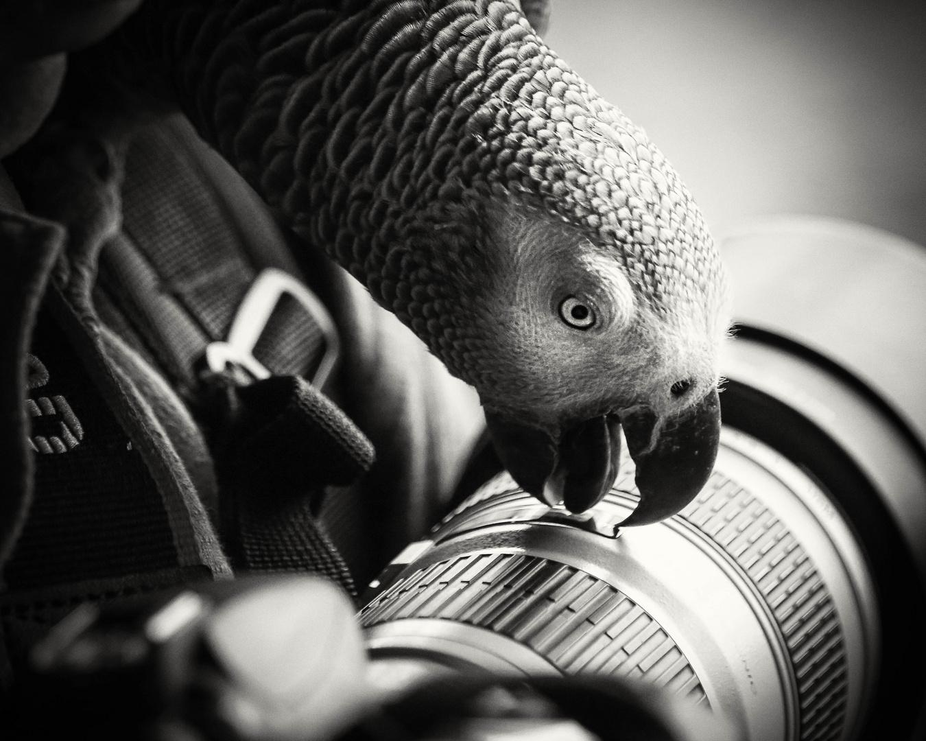 Der Fotograf 1
