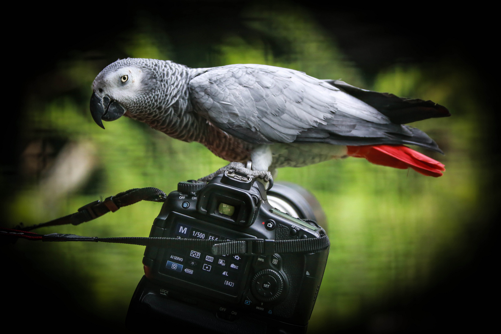Der Fotograf 2
