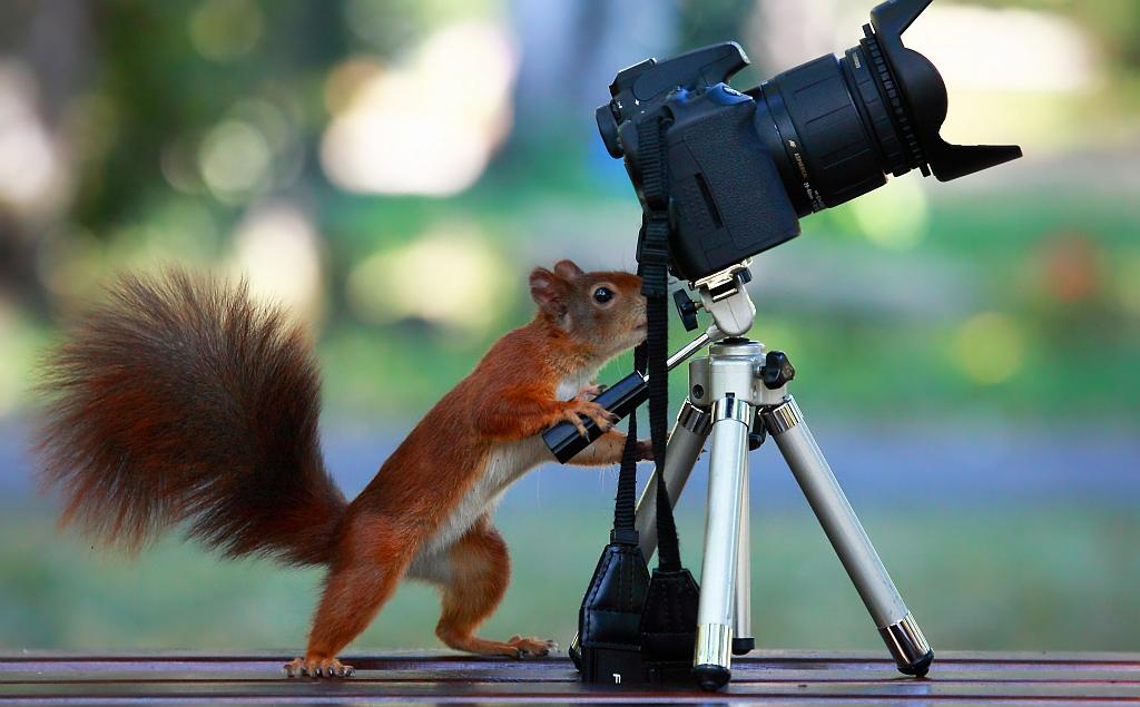 Der Fotograf beim Einrichten