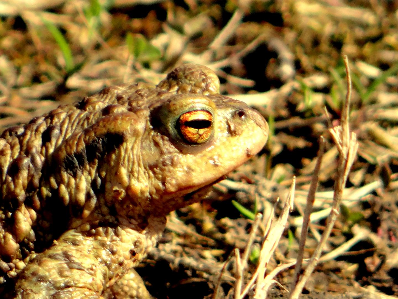 Der Frosch 2