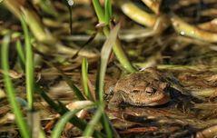Der Frosch!