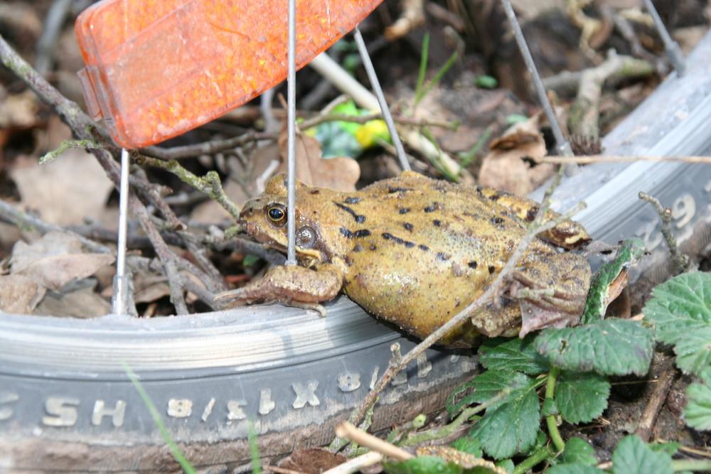 der Frosch, der durch die Speichen blickt ...