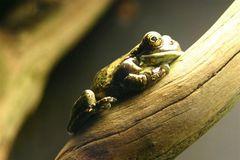 Der Frosch - Wilhelma