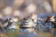 ~ Der Froschkönig ~