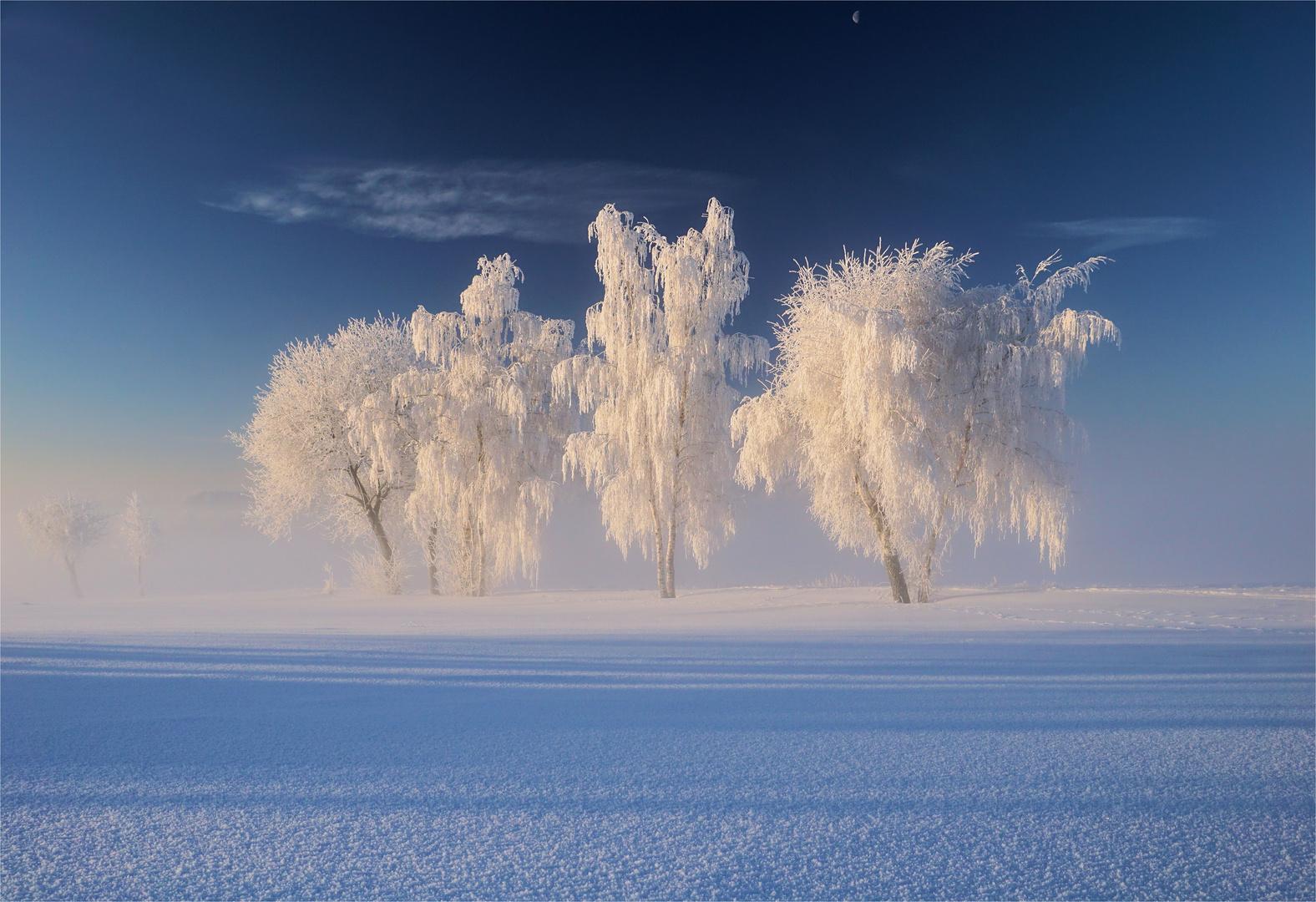 Der Frost, die Bäume und der Mond
