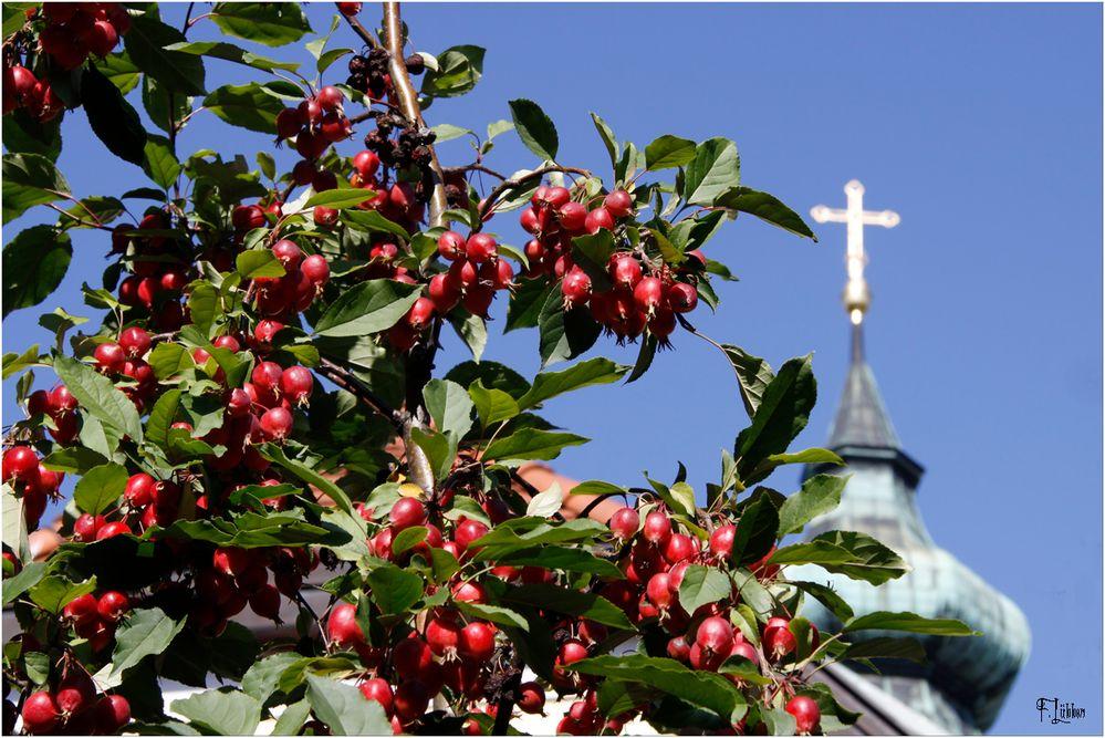 Der Früchtebaum