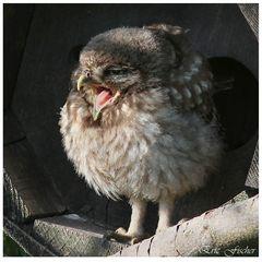 Der frühe Vogel ....