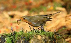 Der frühe Vogel...