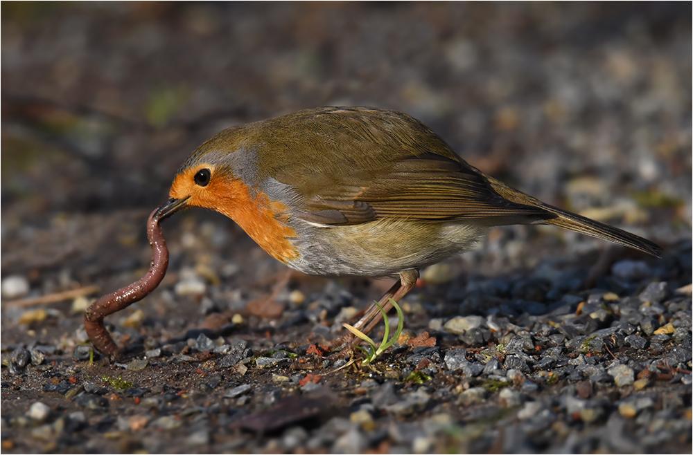 Der frühe Vogel ...