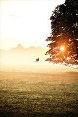 der frühe Vogel fliegt durch den Morgen-Nebel.