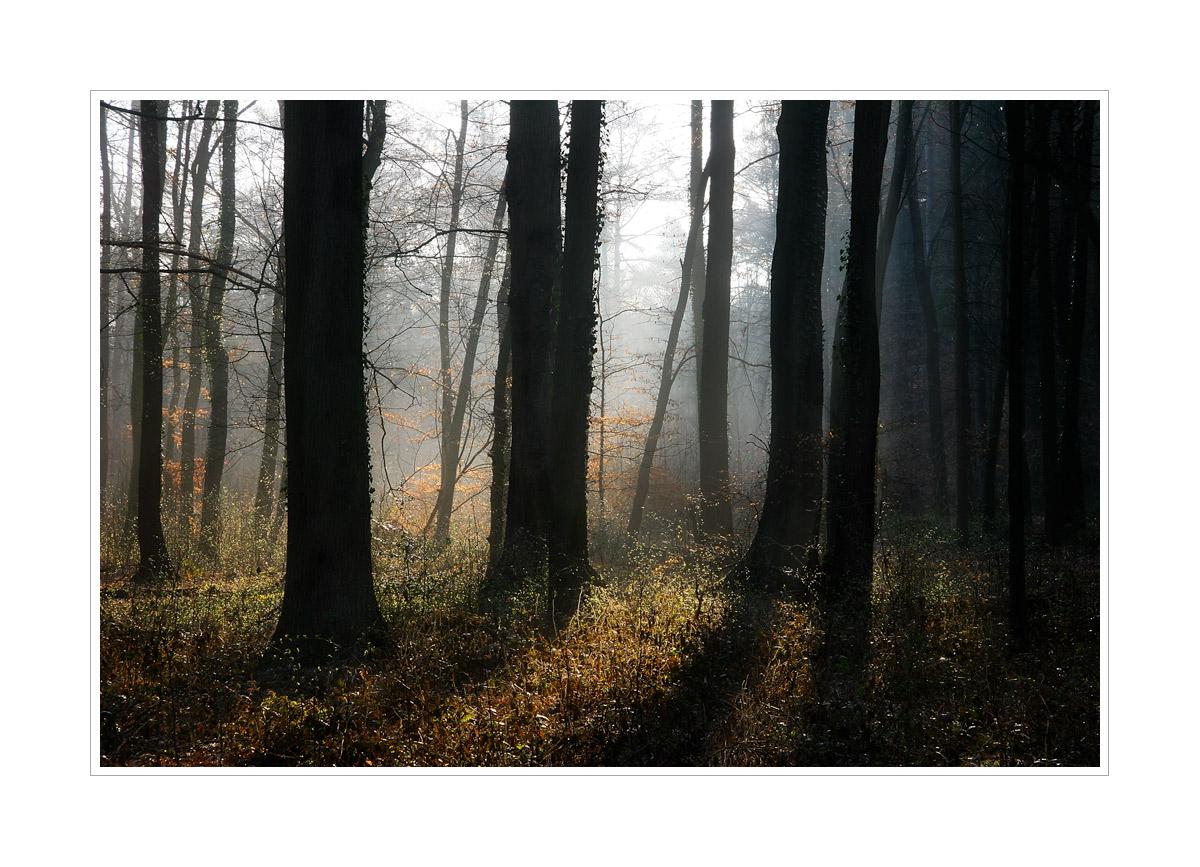 < Der frühe Waldmorgen >