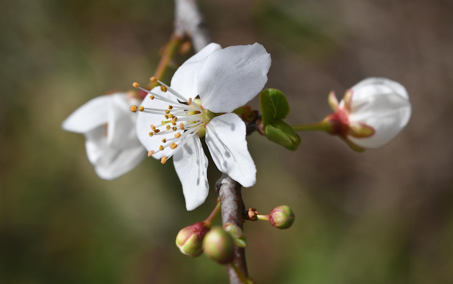 Der Frühling,...