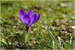Der Frühling....