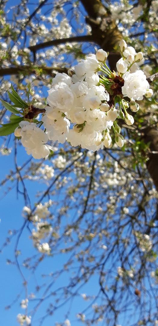 ...der Frühling
