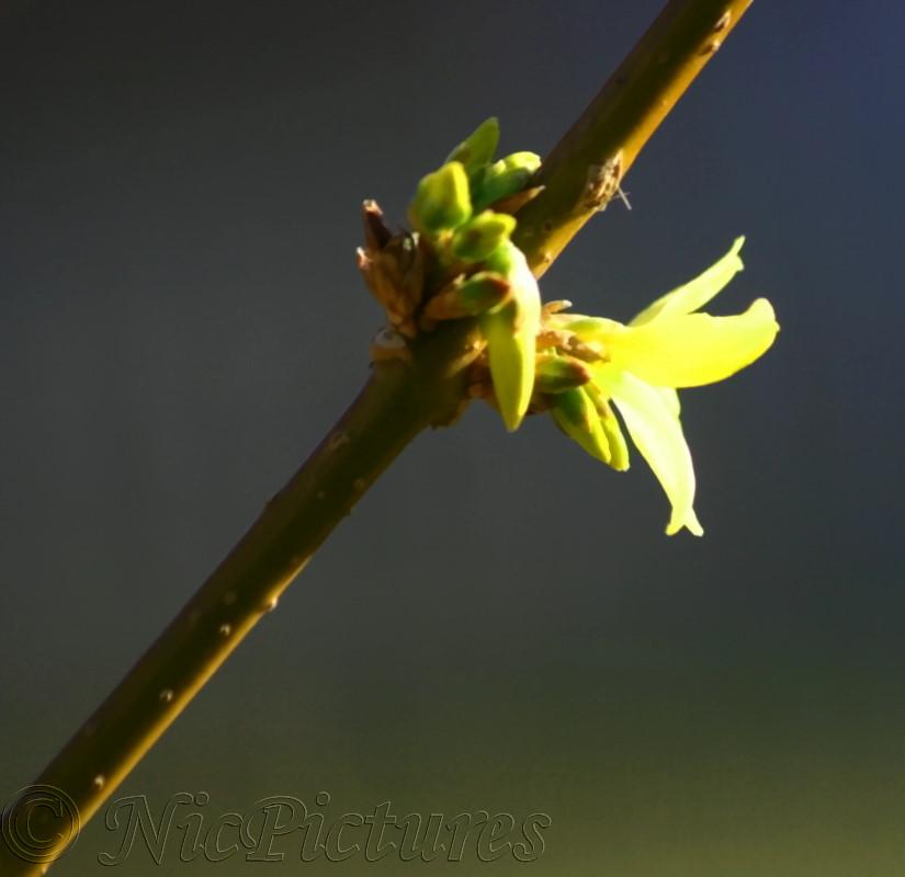 Der Frühling begrüßt uns