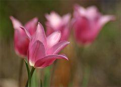 Der Frühling bei Blende 4.5