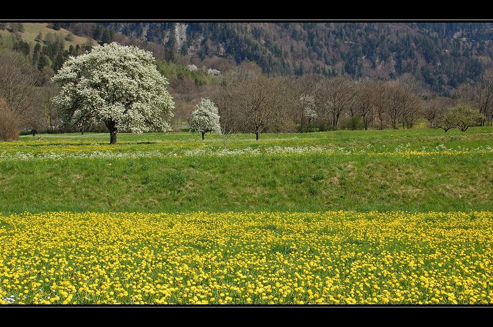 Der Frühling blüht...