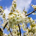 Der Frühling die 2te