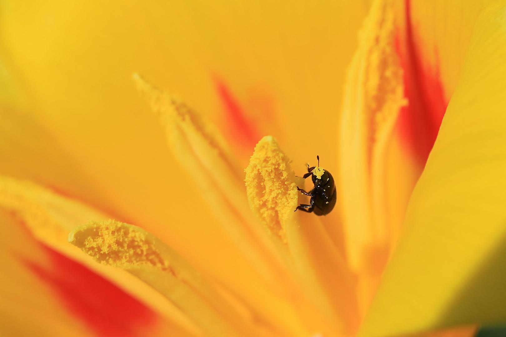 Der Frühling- ein Fest der Sinne- auch für kleine Käfer!