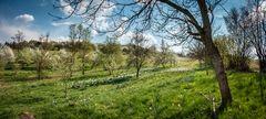 Der Frühling erwacht.... von einem Osterspaziergang