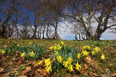 Der Frühling erwacht zaghaft
