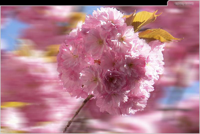 der Frühling fährt Bahnsteig 3 ein