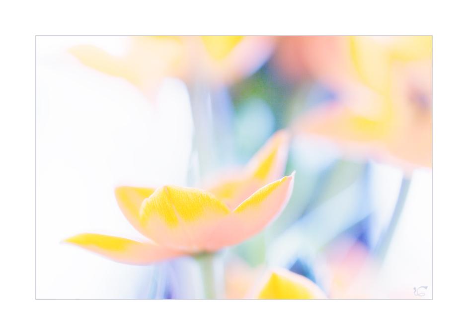 Der Frühling geht schon wieder mit mir durch ;-)