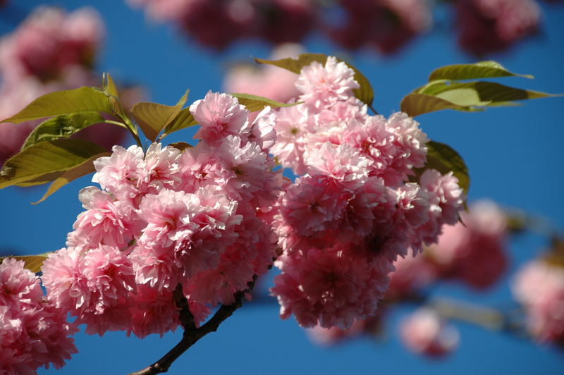 Der Frühling gibt Vollgas