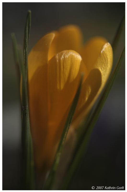 Der Frühling grüßt