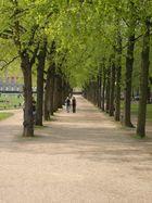 Der Frühling hält Einzug am Hofgarten